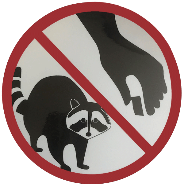 Do not feed the racoons